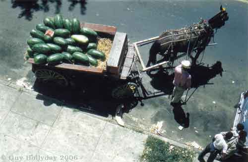 1950's Baltimore street A-rab selling melons from a horse cart; Guy Hollyday